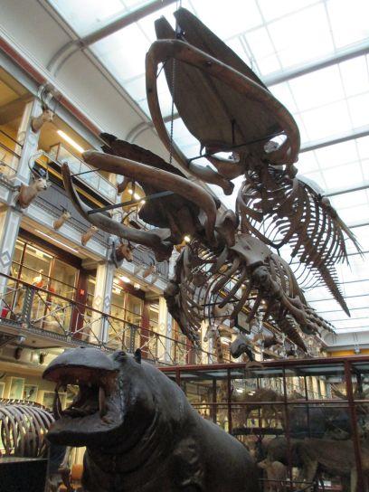natural history museum of ireland dublin exhibits stuffed