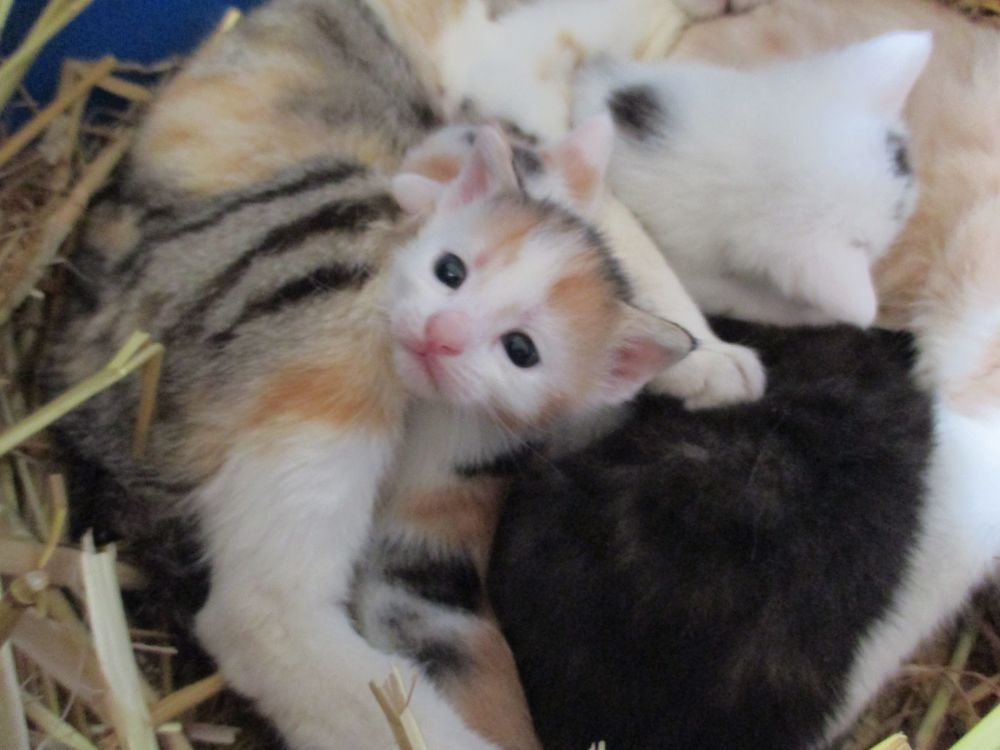 Mother Cats Sharing Kittens