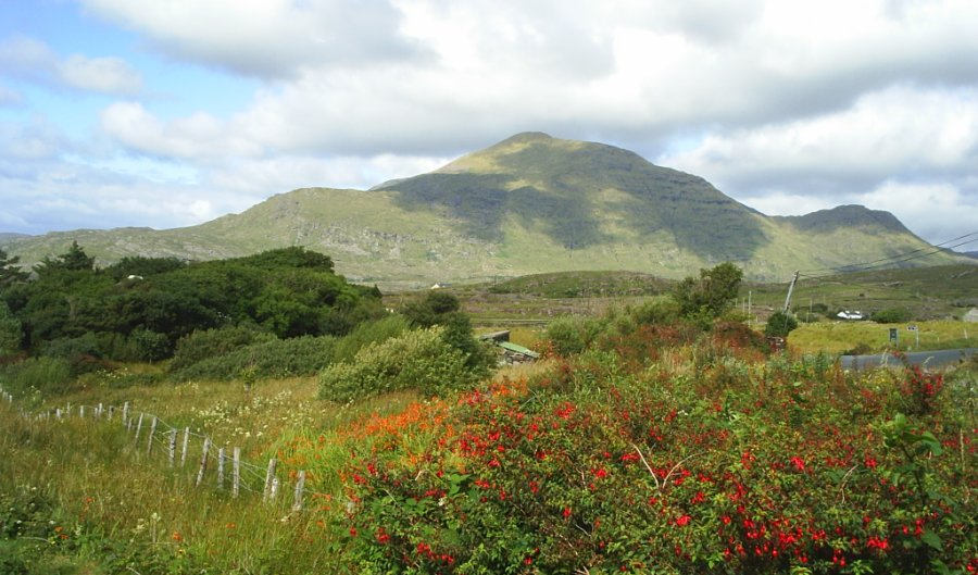 5 Mweel Rea Mountain Connemara County Galway Fuchsia