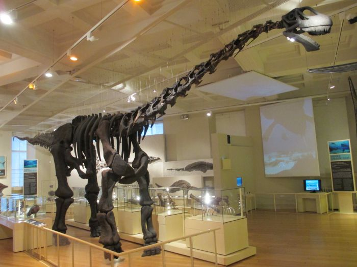 Leicester Museum Art Gallery Dinosaur Skeletons Fossils