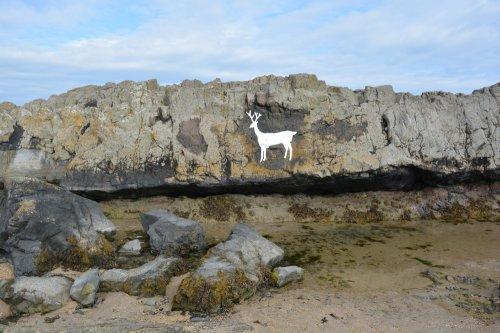 Walking from bamburgh to Budle Bay estuary bird watching