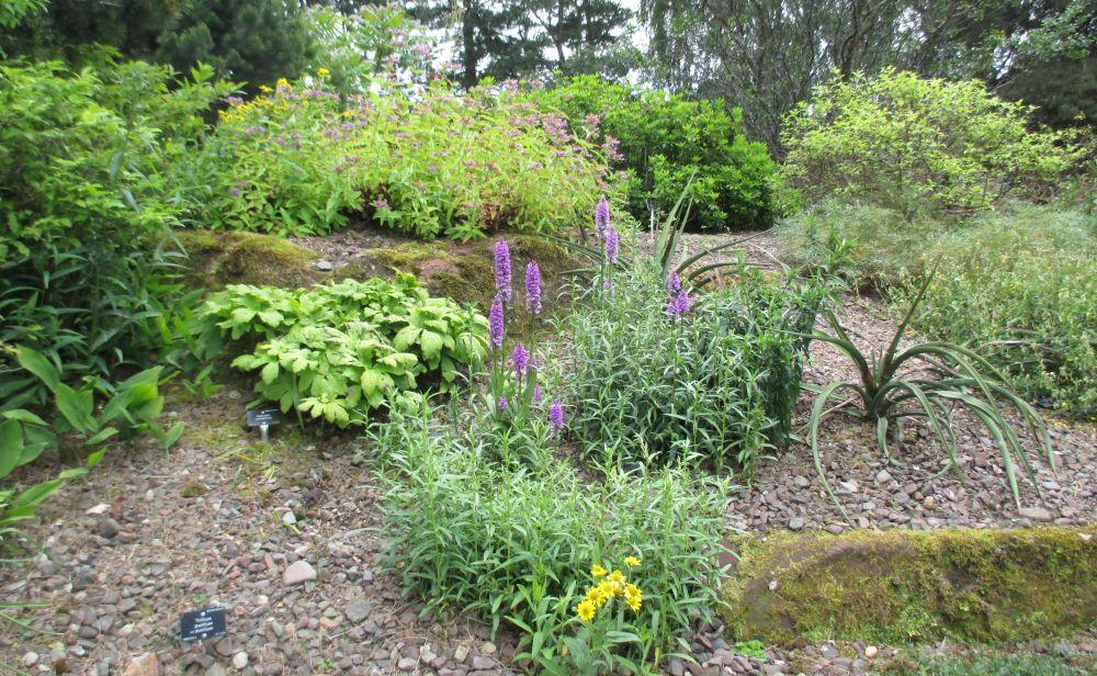 Royal botanic garden edinburgh plant collections walks for Garden trees scotland