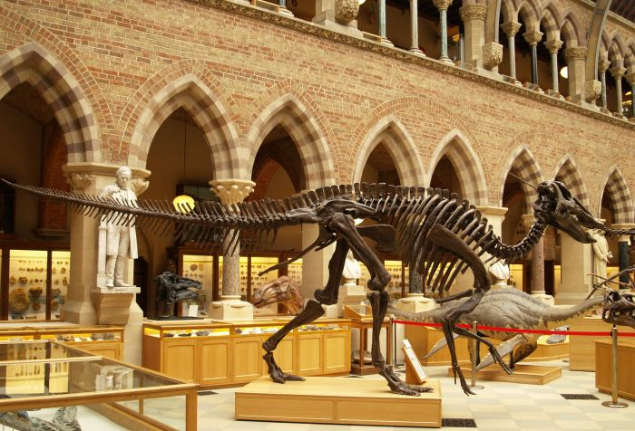 dinosaur skeleton fossil fast moveing carnivore gcse biology igcse O level revision