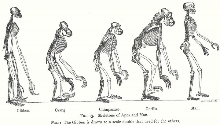 Genetic variation Darwin's theory of 'natural Selection
